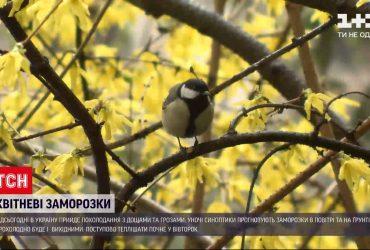 Погода в Україні: на більшість регіонів суне похолодання з дощами, а подекуди й із грозами