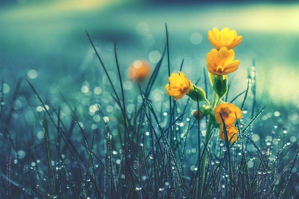 Завтра в Украине все еще будут лить дожди / Фото ua.depositphotos.com