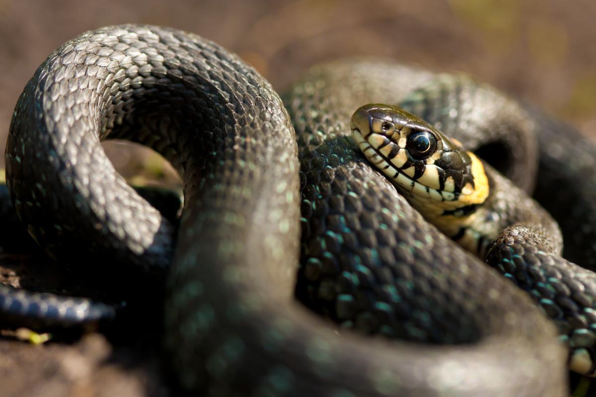 Змея укусила мальчика, который играл во дворе дома, за палец руки / фото ua.depositphotos.com