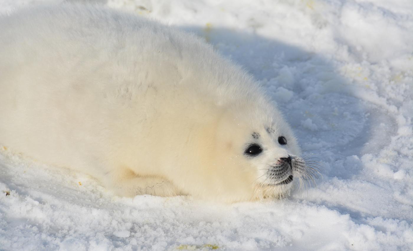 Експерти вважають, що загиблих тварин може бути більше / фото sev-in.ru
