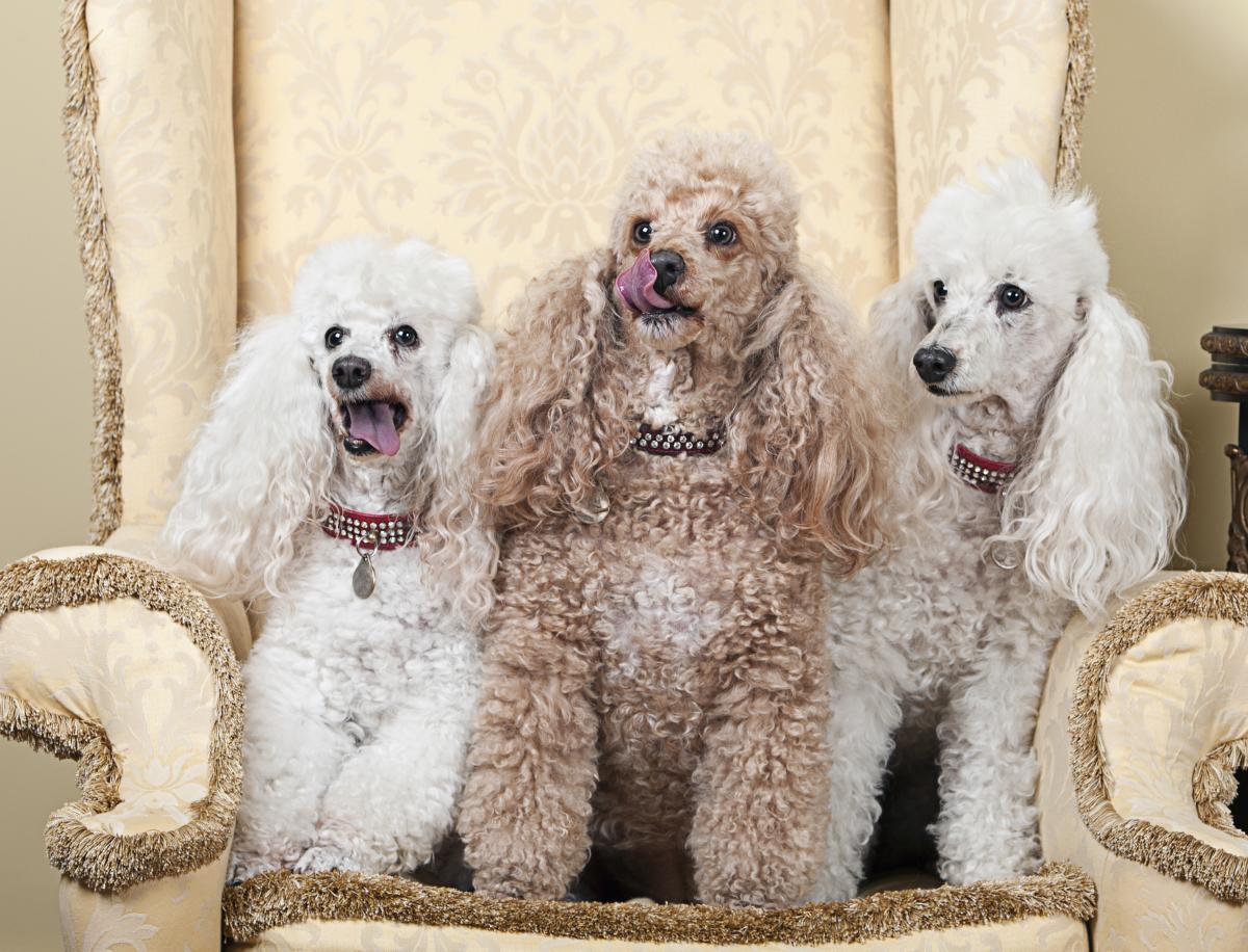 Собаки, які більше контактують з іншими, поводяться дружелюбніше / фото ua.depositphotos.com