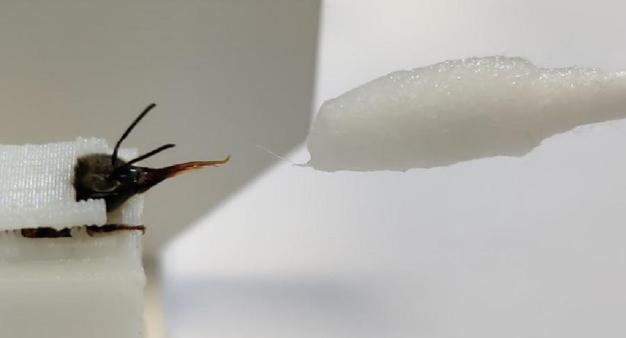Ученые тренировали насекомых, давая им лакомство / фото wur.nl