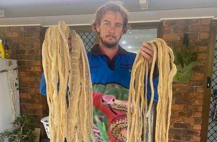 Австралийцы нашли на крыше змеиные шкуры / фото facebook.com/SunshineCoastSnakeCatchers
