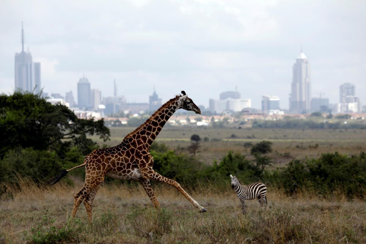 Перепись проведут с целью выяснения общего количества диких животных / фото REUTERS