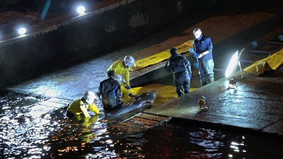 В Лондоне кит застрял в шлюзе / фото bbc.com