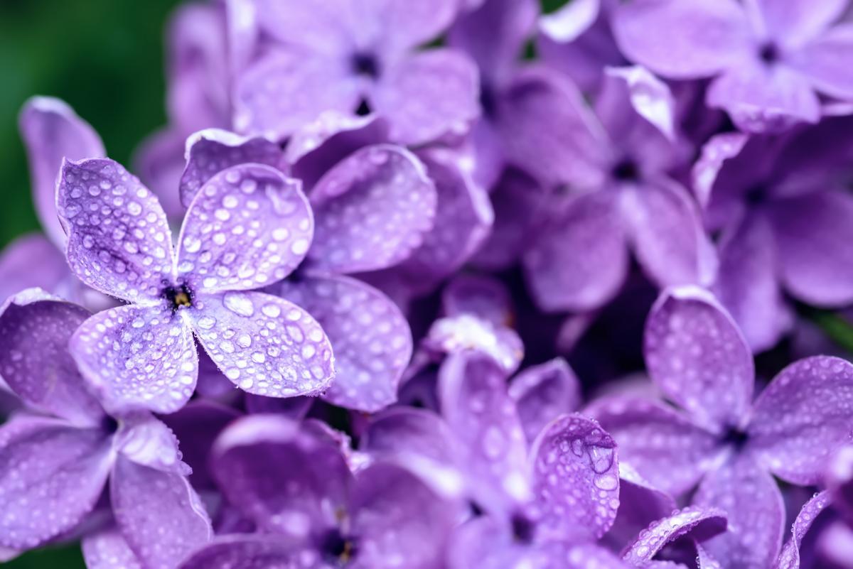 Сегодня в Украине будет дождливая погода / фото ua.depositphotos.com