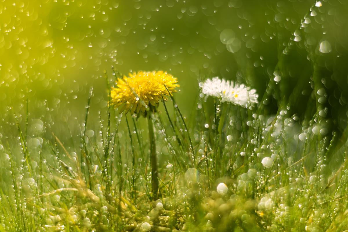 Сегодня ожидаются теплые дожди / Фото ua.depositphotos.com