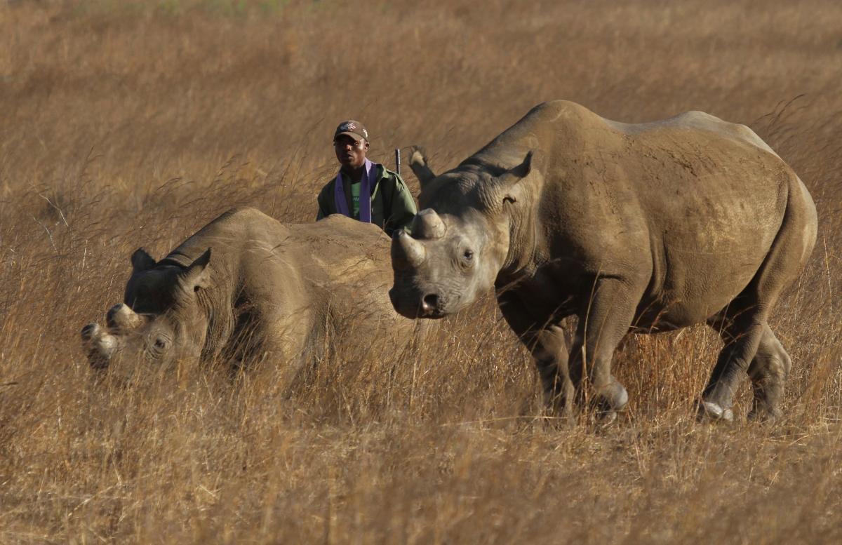 Животных завести в парк могли бы еще в прошлом году, но пандемия помешала / Фото: REUTERS
