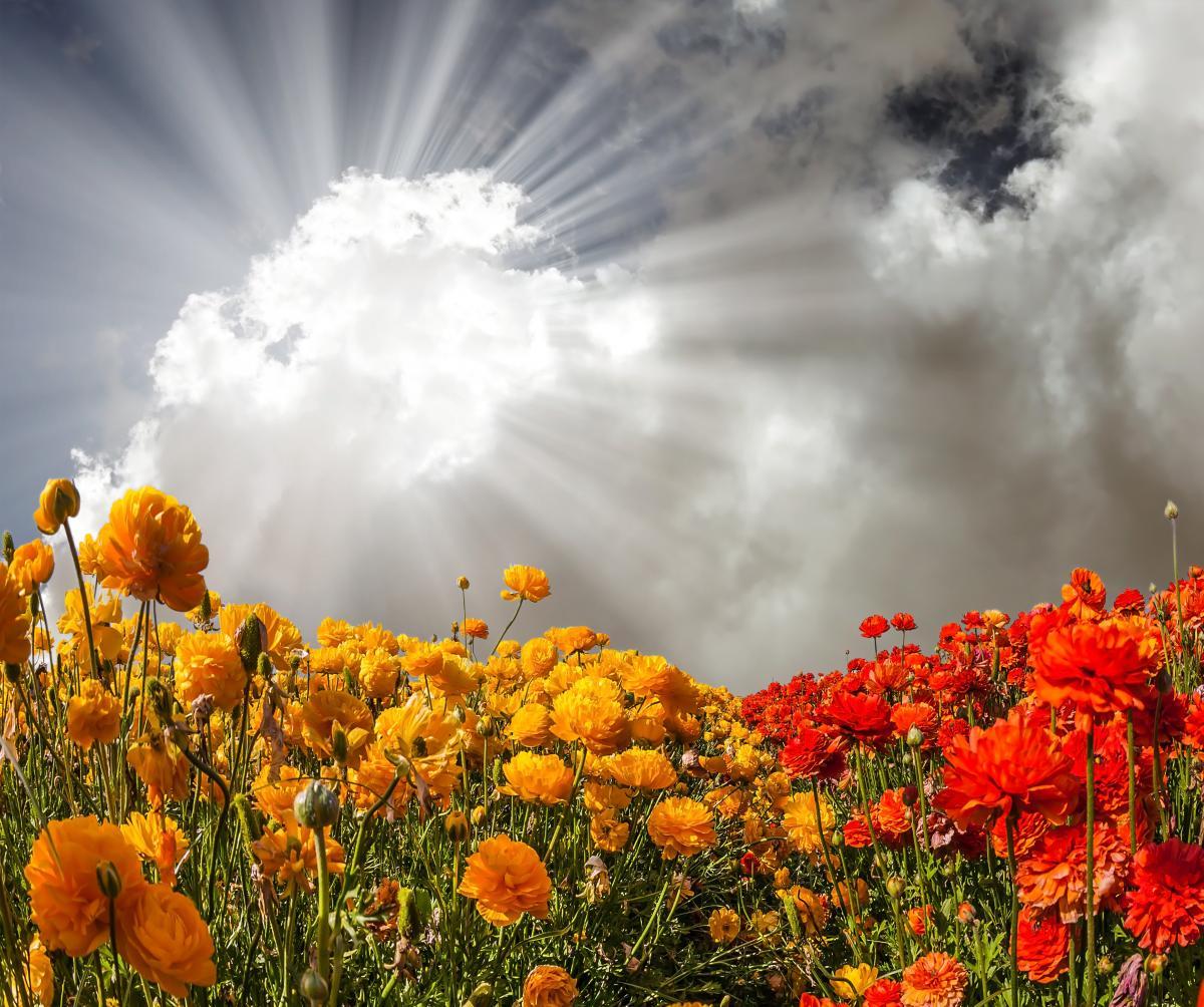 В стране будет дождливо и тепло / Фото ua.depositphotos.com