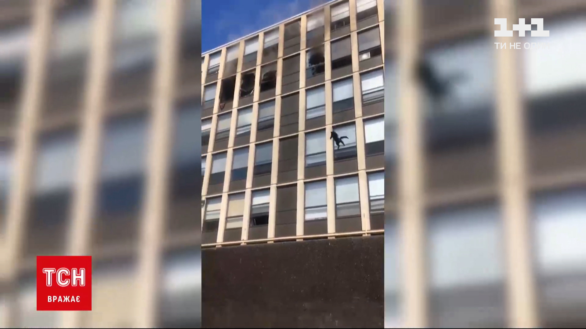 Курьезный инцидент произошел в Чикаго / скриншот извидео