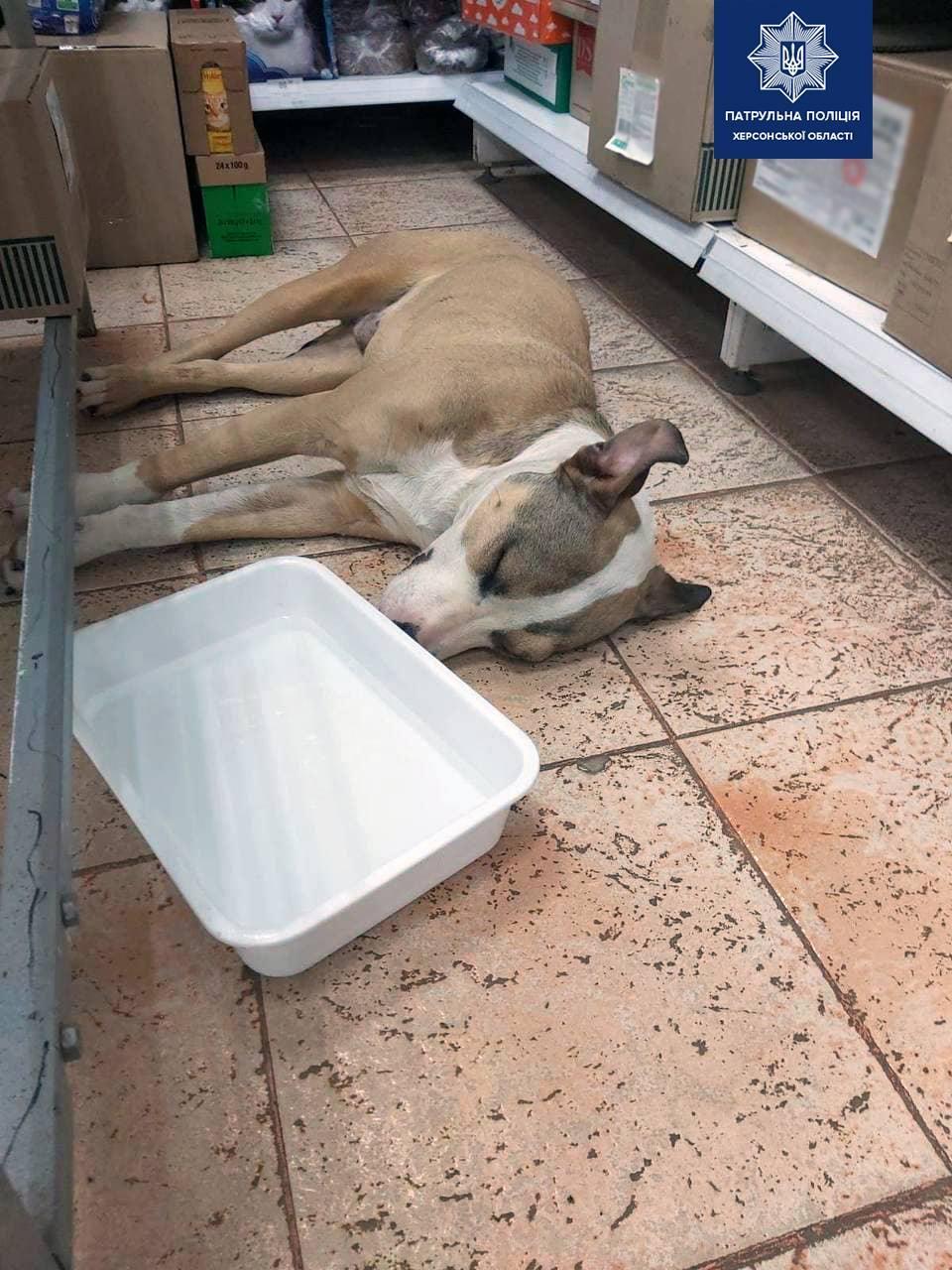 Собака потеряла сознание из-за побоев / фото патрульная полиция