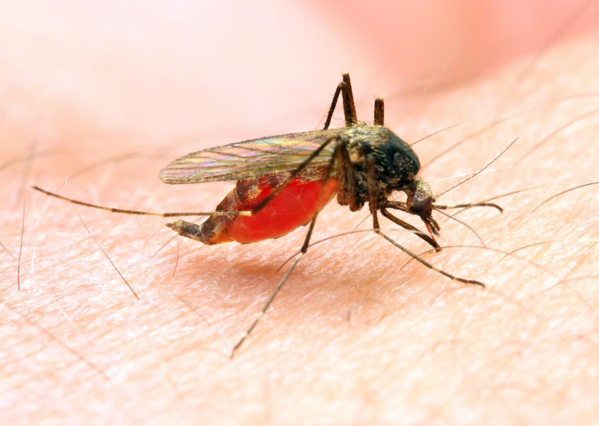 Комары заполонили туристический Бердянск / фото ua.depositphotos.com