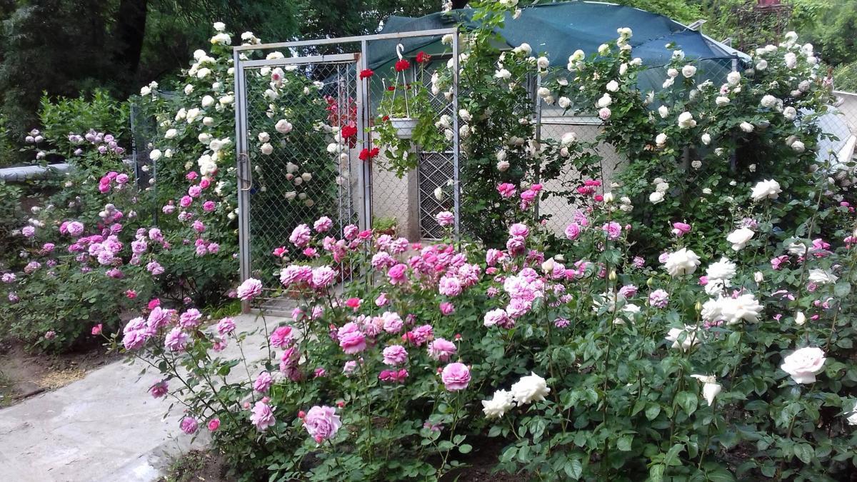 Одесский ботанический сад открыли для прогулок на два дня / фото facebook.com/oldgarden.onu
