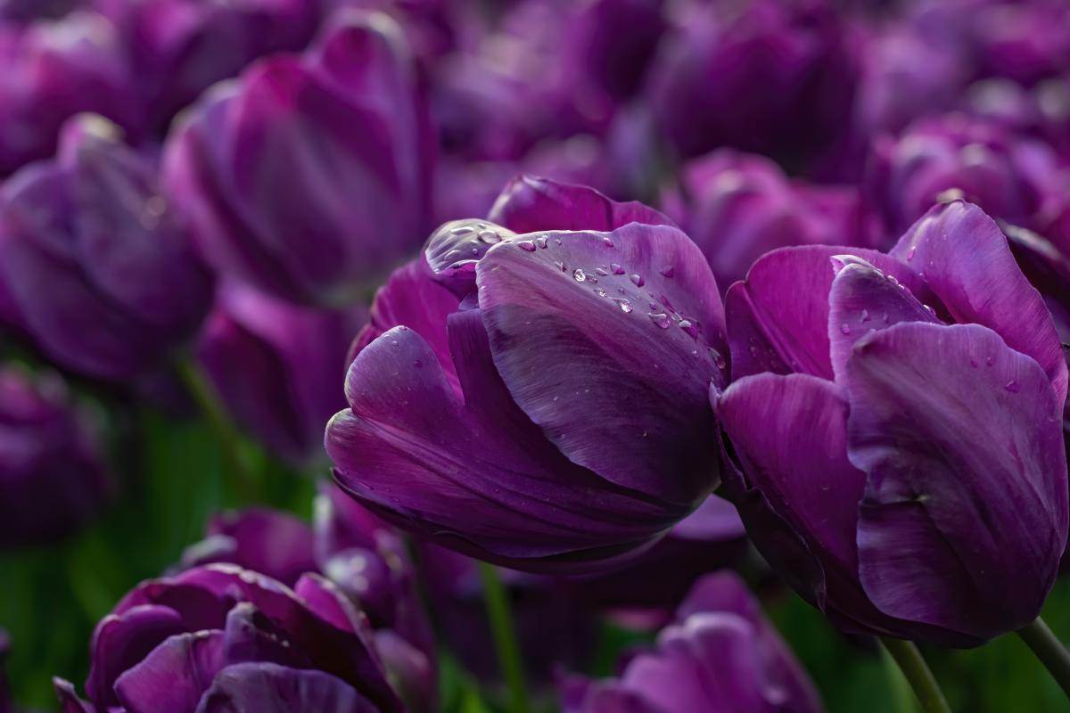 На этой неделе в Украине будет дождливо / Фото ua.depositphotos.com