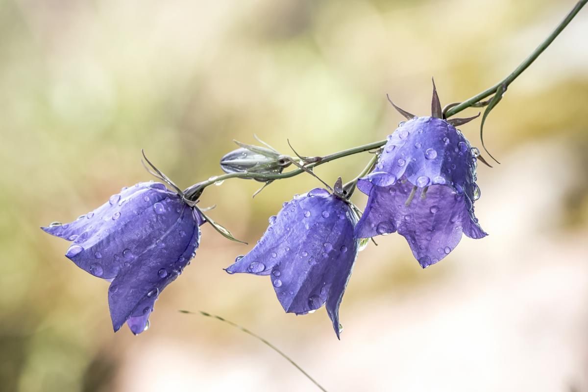 21 червня - Міжнародний день квітки / фото ua.depositphotos.com