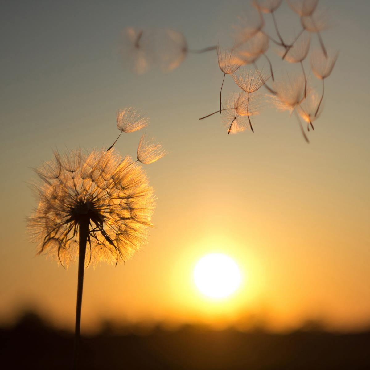 Завтра в Україні очікується сильний вітер / фото ua.depositphotos.com