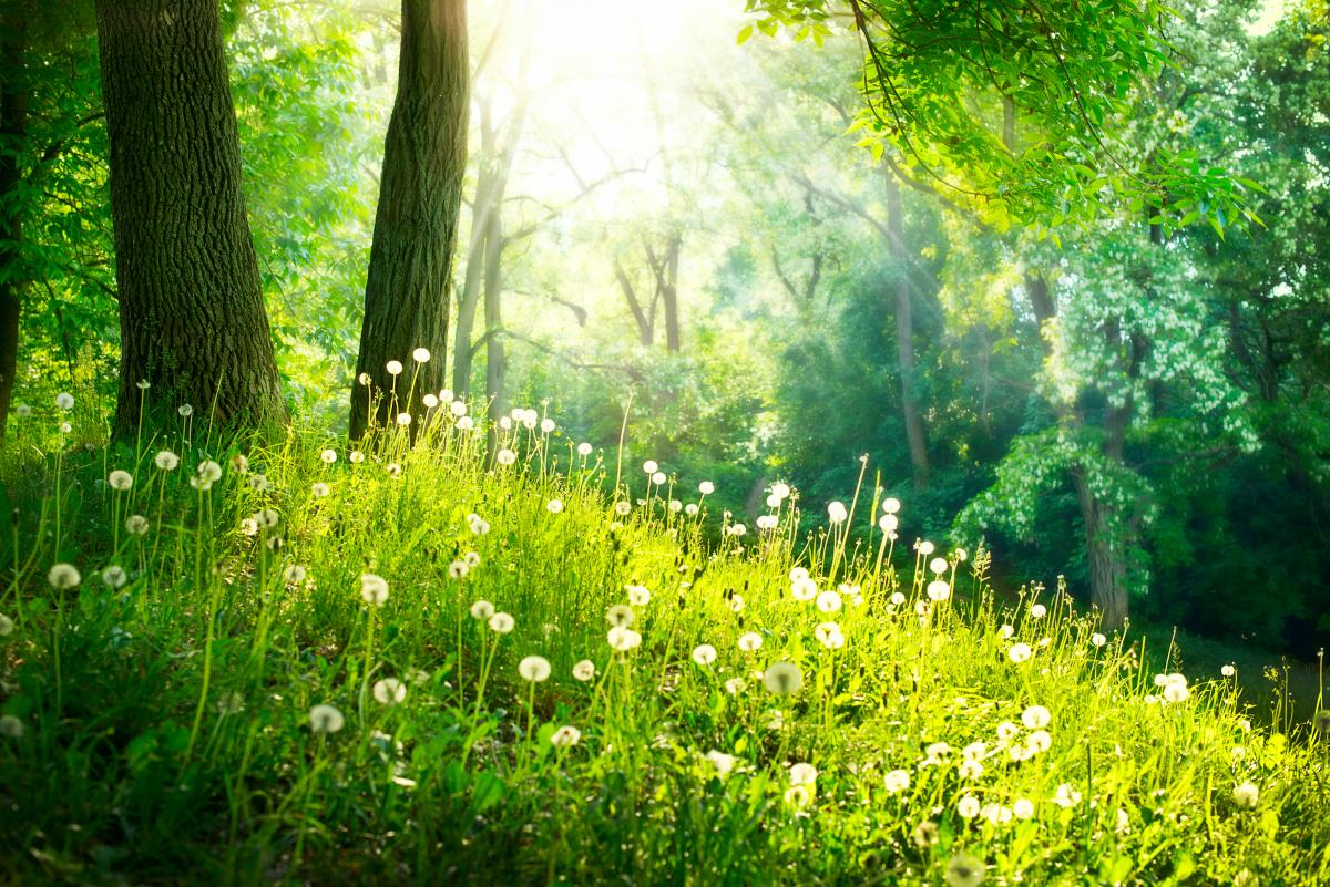 Что можнои нельзя делать в день летнего солнцестояния / фото ua.depositphotos.com