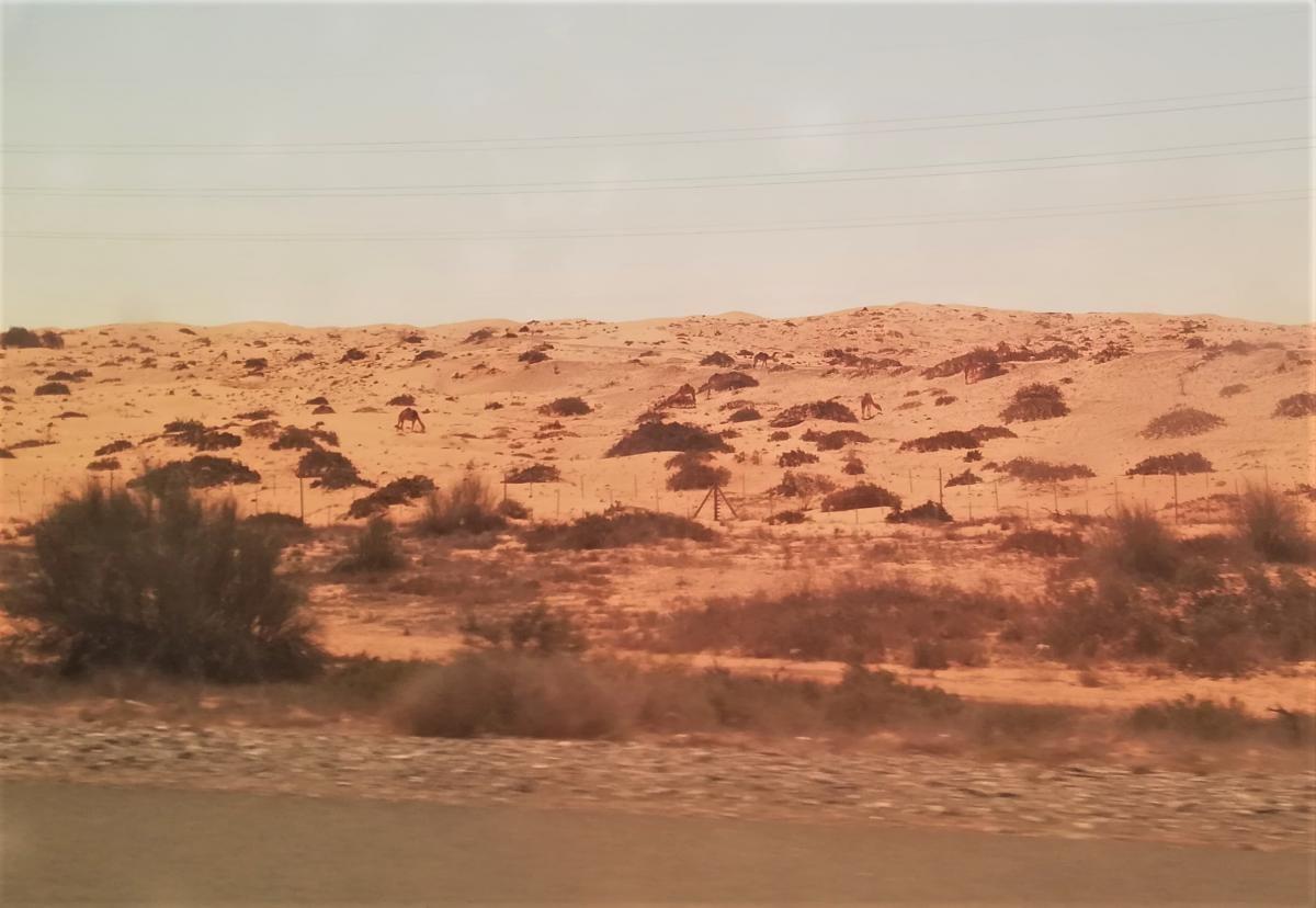 Десь тут можна розгледіти верблюдів / фото Марина Григоренко