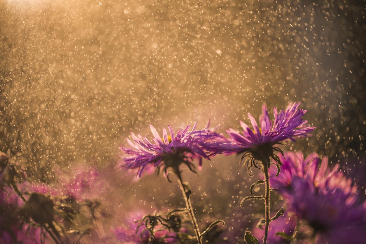 Цьому тижняв Україні дощитиме/ Фото ua.depositphotos.com