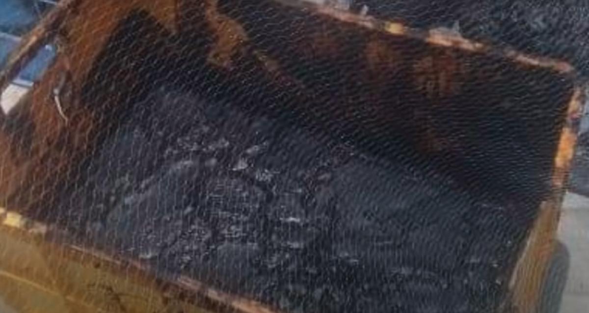 Рыбаки нашли ценную амбру в брюхе мертвого кита в Йемене/ скриншот