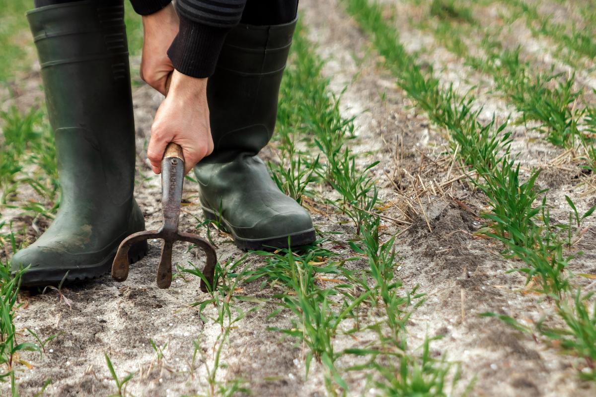На другому місці за обсягом землі - незалежні приватні агрокомпанії / фото - ua.depositphotos.com