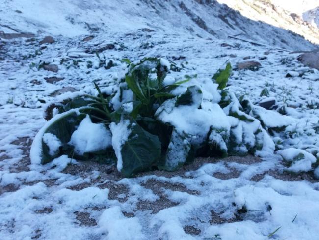 В Турции в июне выпал снег / фото DHA