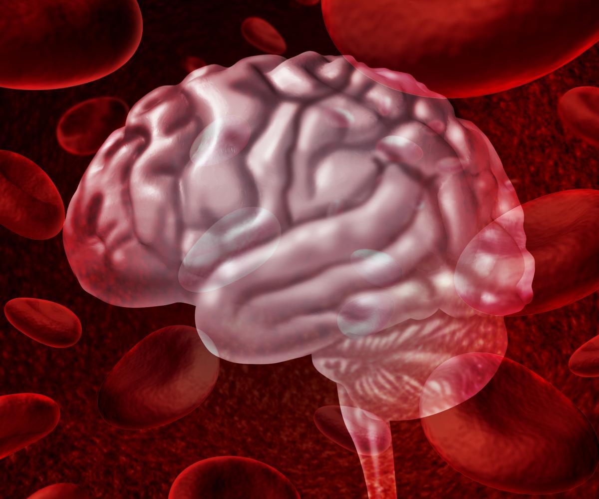 Вчені назвали фактори, які впливають на обсяг мозку \ фото ua.depositphotos.com
