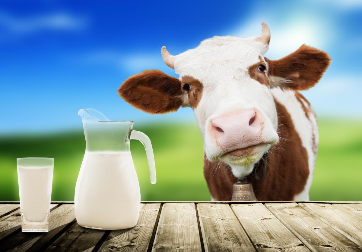 Мутаціяв генах корів розділила молоко на лагідне і агресивне / фото ua.depositphotos.com
