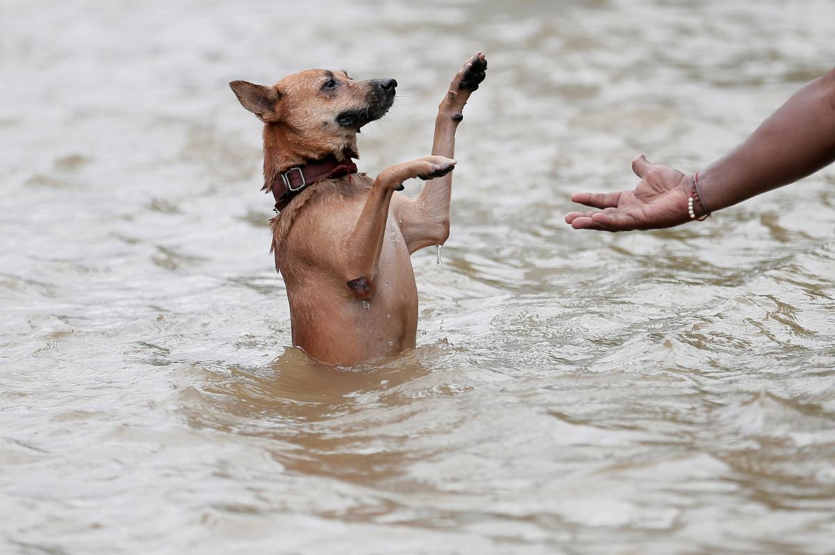 Мощные дожди вызвали наводнение в Шри-Ланке / фото REUTERS
