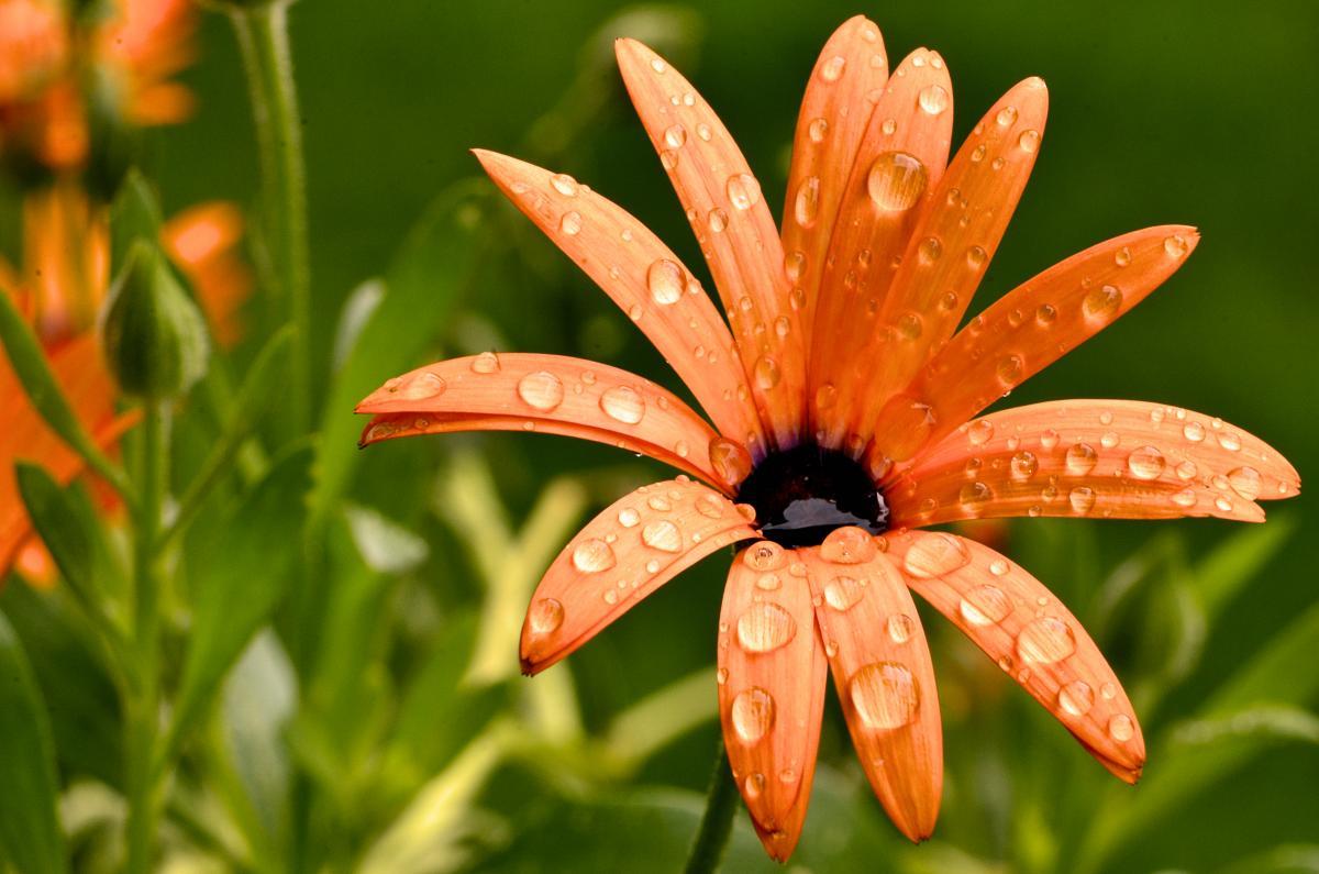 На выходных дожди сместятся на запад Украины / фото ua.depositphotos.com