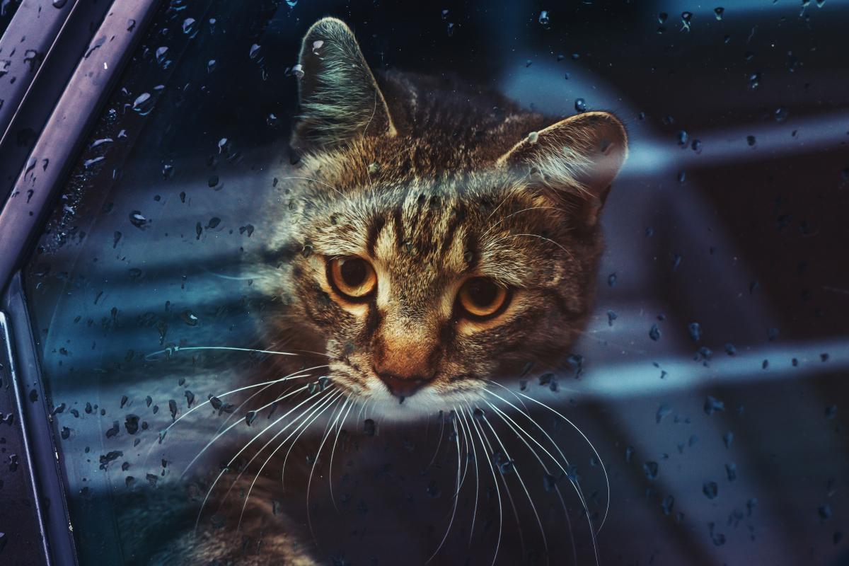 В Украине идут дожди / фото ua.depositphotos.com