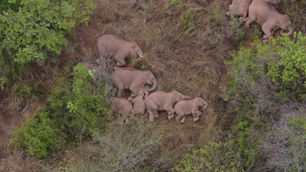 Дикие азиатские (индийские) слоны занесены в Красную книгу \ фото REUTERS