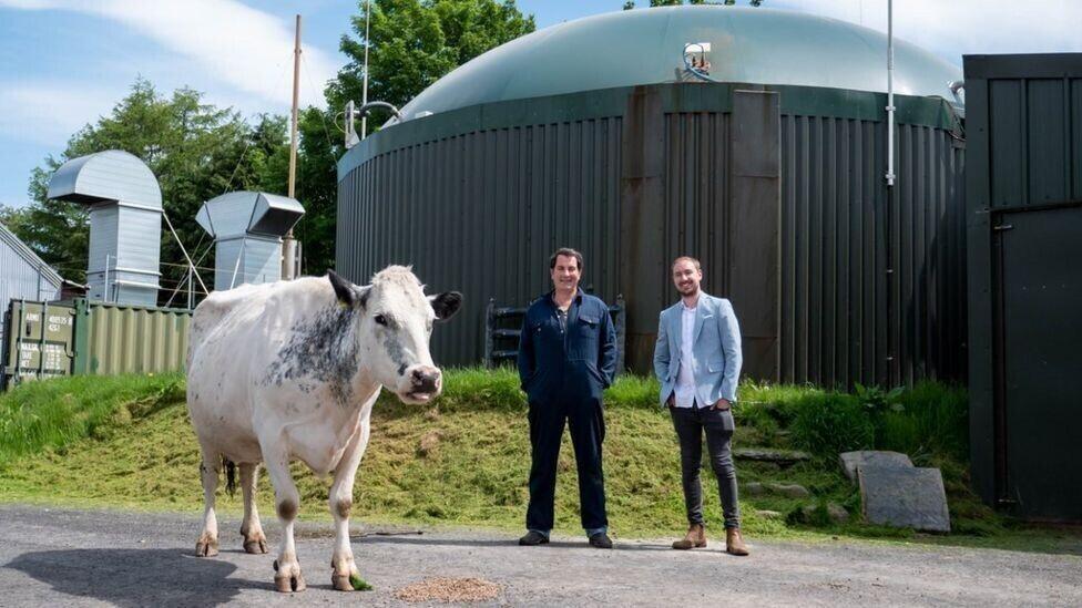Фермер майнил криптовалюту на энергии из коровьего навоза, но не биткоины/ фото bbc.com