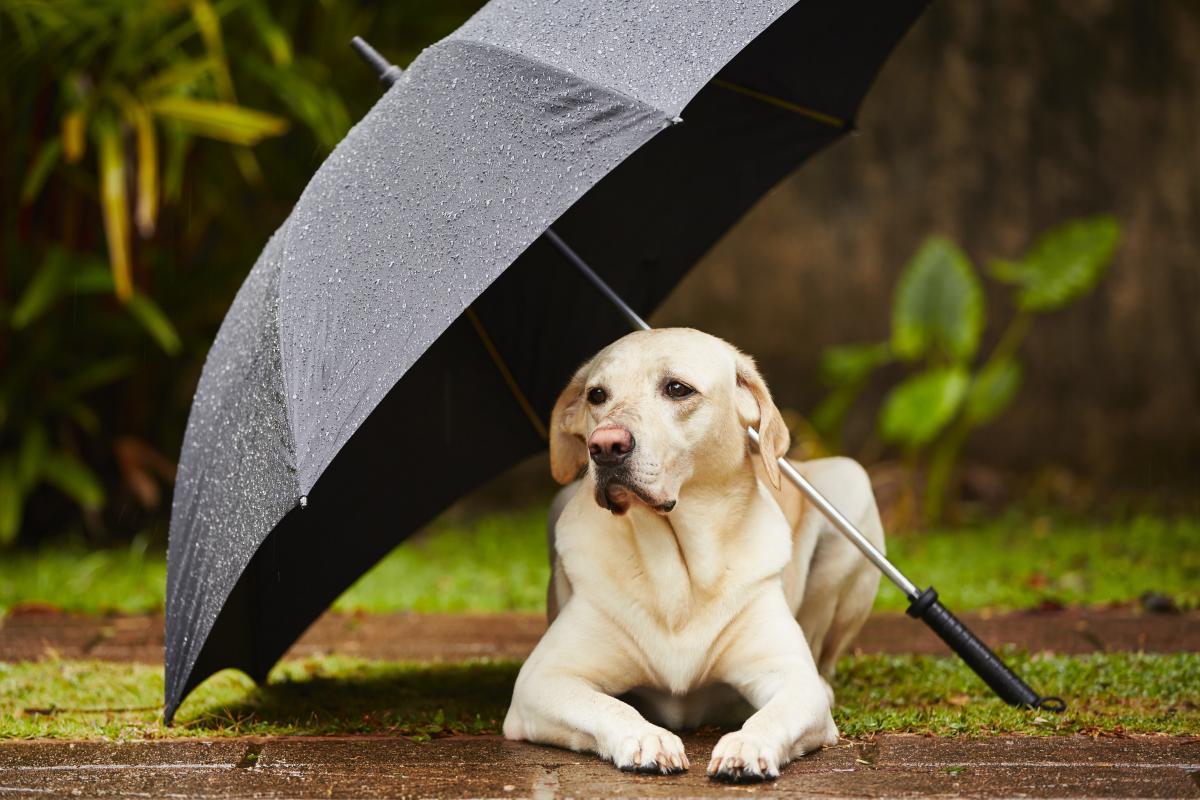 11 июня дожди в Украине продолжатся / фото ua.depositphotos.com