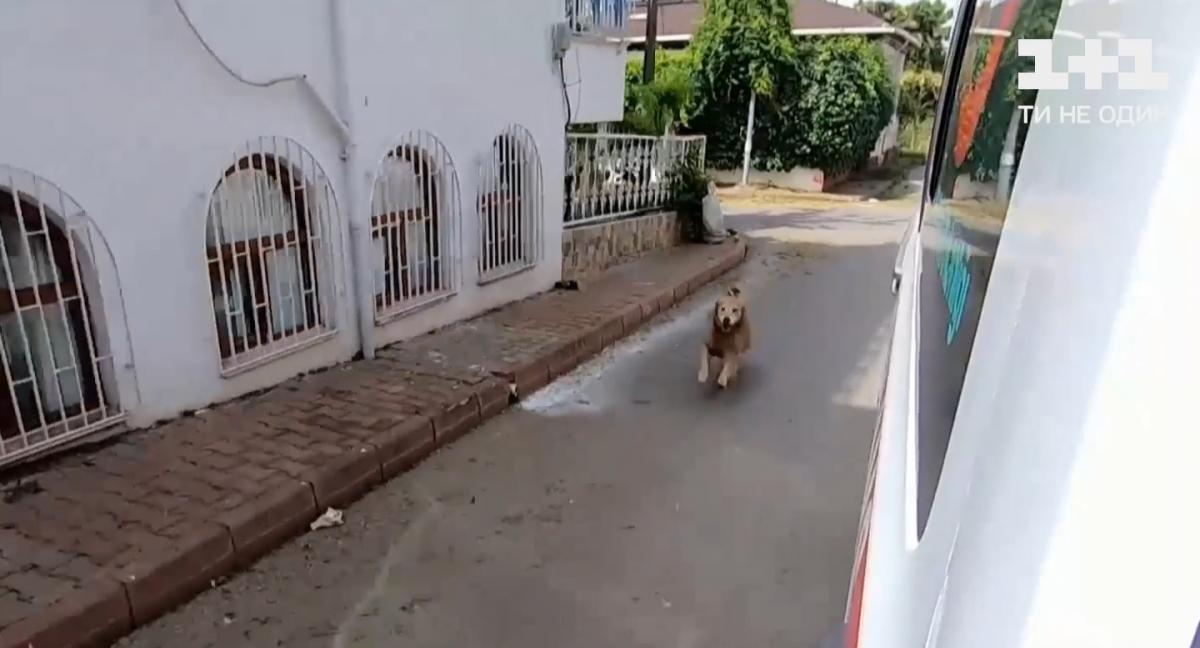 Собаку не пустили в автомобиль / Скриншот