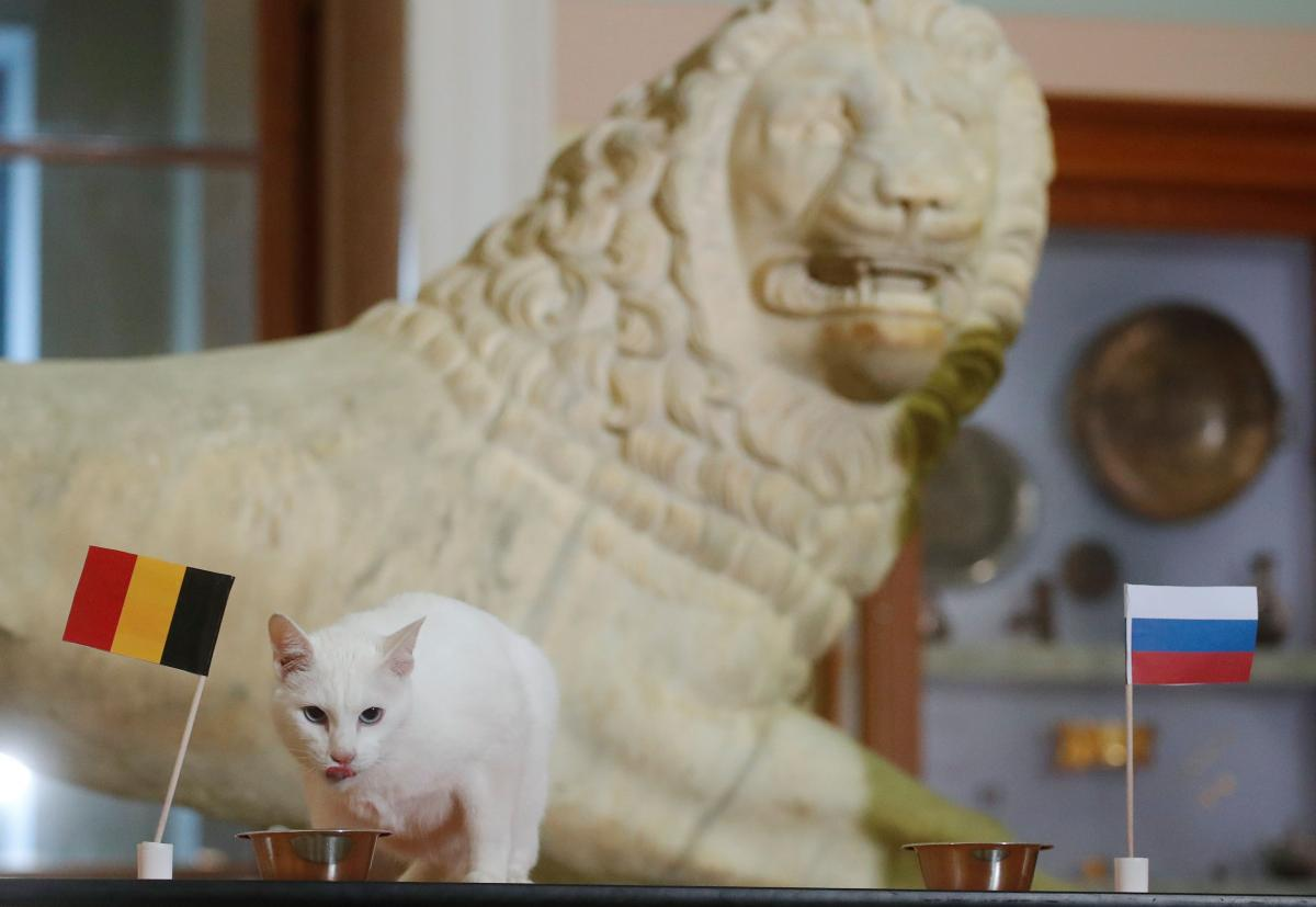 Кіт на прізвисько Ахіллес передбачив перемогу Бельгії в матчі з Росією / фото REUTERS