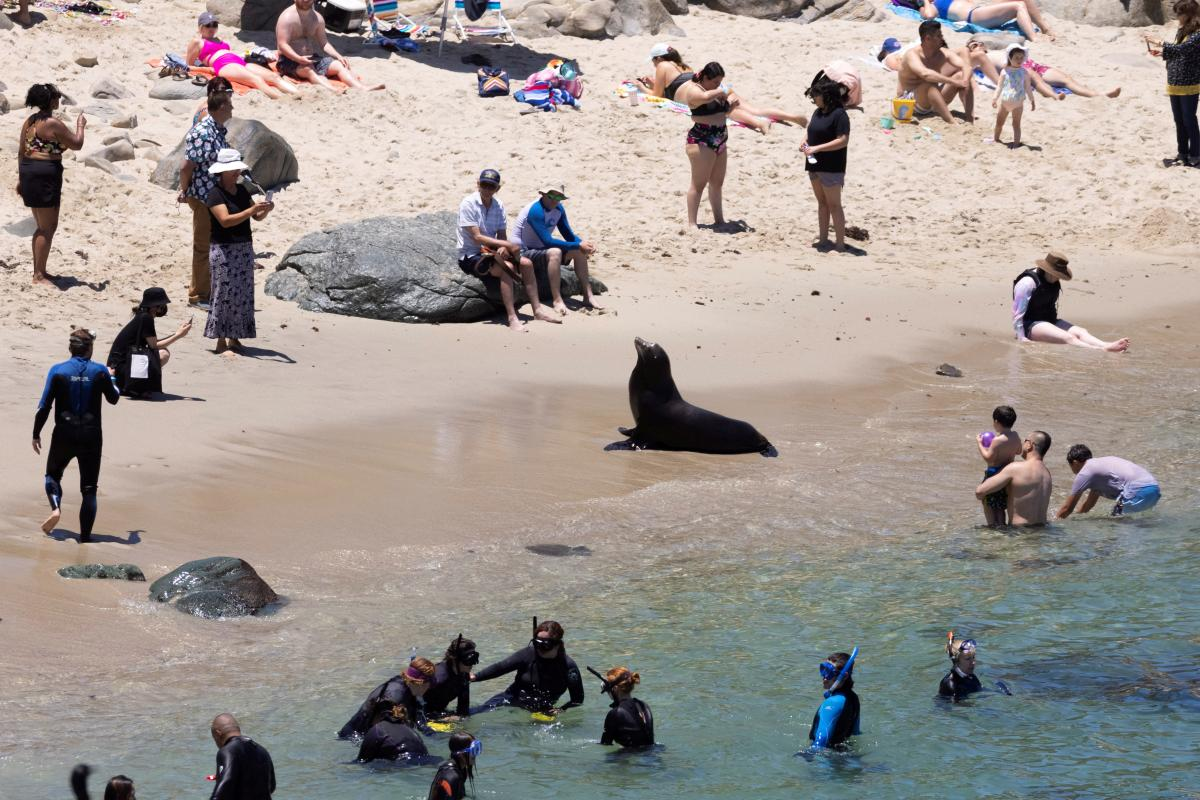 Морской лев на пляже в Калифорнии / фото REUTERS