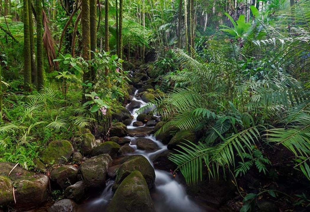 22 июня - Всемирный день тропического леса / фото flickr
