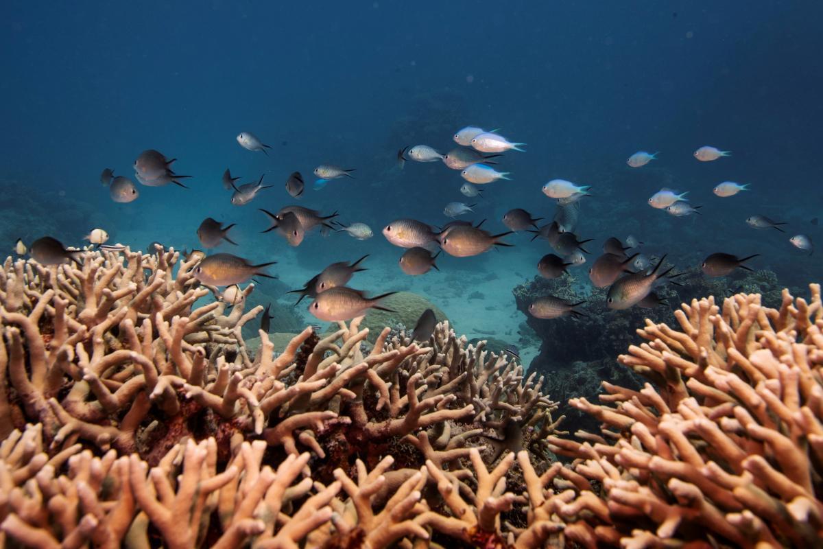 У 1981 році 2300-кілометровий риф отримав звання всесвітньої спадщини / Фото: REUTERS