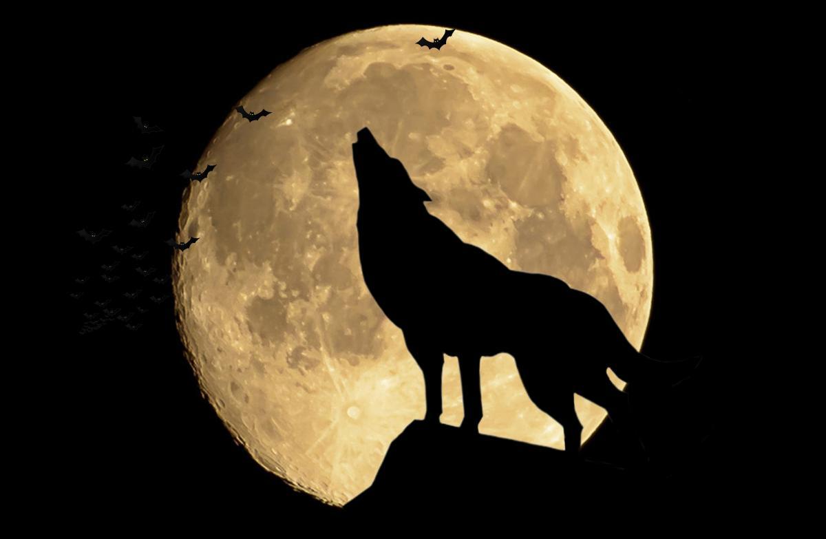 Приметы на полную луну / ru.depositphotos.com