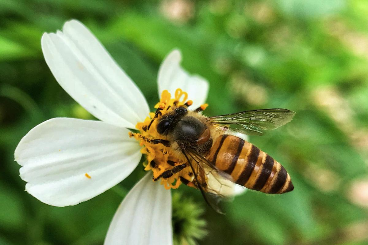 Пчела / ru.depositphotos.com