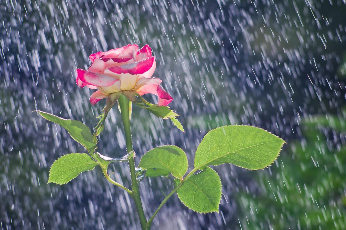 В Україну повертаються дощі / фото ua.depositphotos.com
