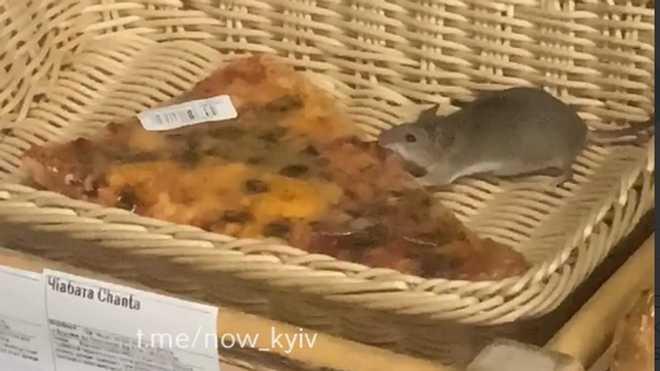 """Свідки інциденту стверджують, що пацючка бачили у """"Форі"""" на Троєщині / скрін відео"""