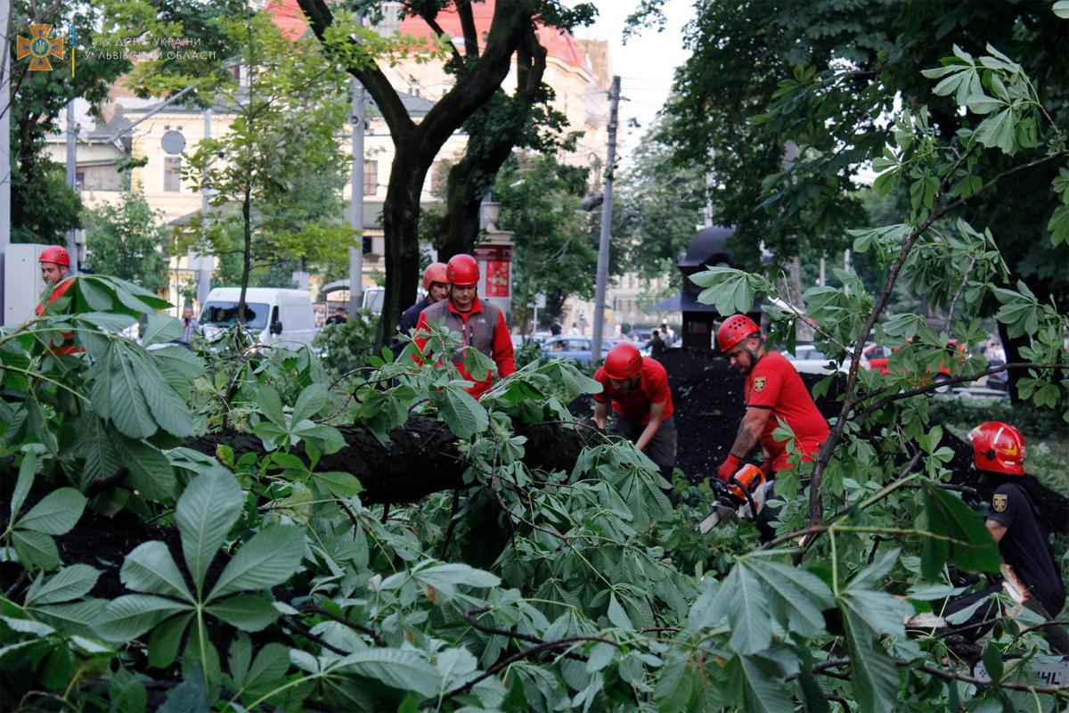 В результате падения дерева травмирован один человек / lv.dsns.gov.ua