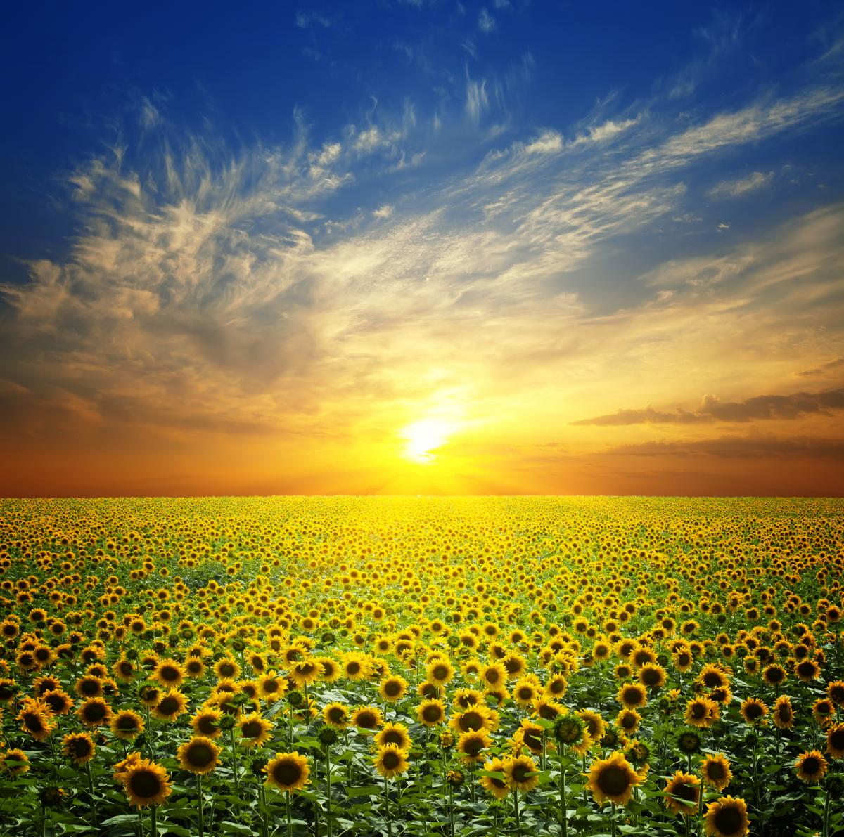 7 июля в Украине будет нестабильная погода / фото ua.depositphotos.com