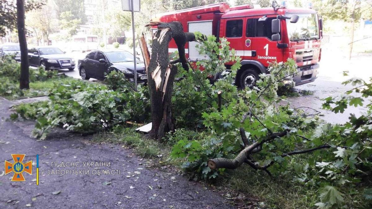 Сильный ветер ломал деревья в Запорожье / фото ГСЧС