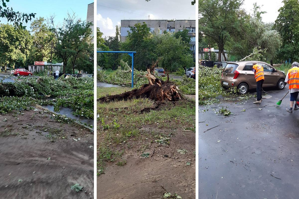 Ветер повалил несколько деревьев / фото Наталья Горбенко