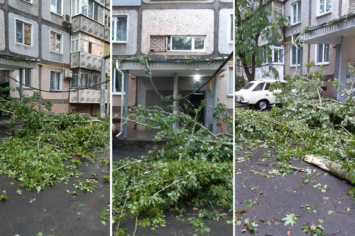 Оборванные ветки деревьев мешали и пешеходам, и автомобилям / фото Наталья Горбенко