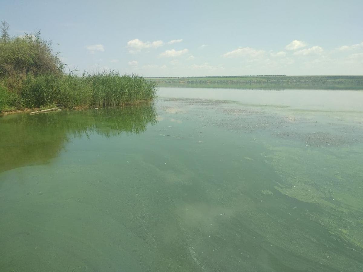 Возле воды чувствуется резкий запах сероводорода / фото facebook.com/chernomorpatrol