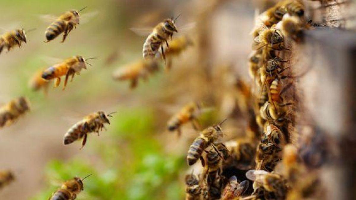 Оно ещё и летает: названы наиболее опасные насекомые летом